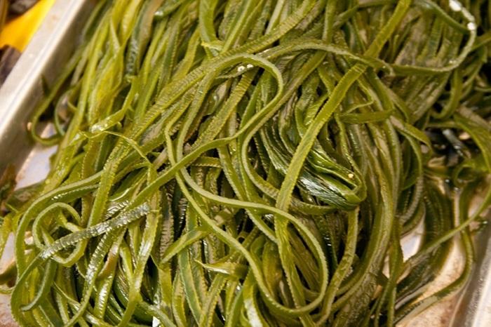 Какую водоросль называют морской капустой