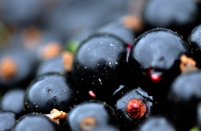 Черная смородина – полезные свойства и противопоказания