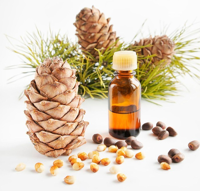 Лечебные свойства и противопоказания масла кедрового ореха