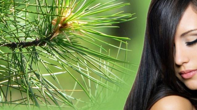 Полезные свойства кедрового масла в косметике