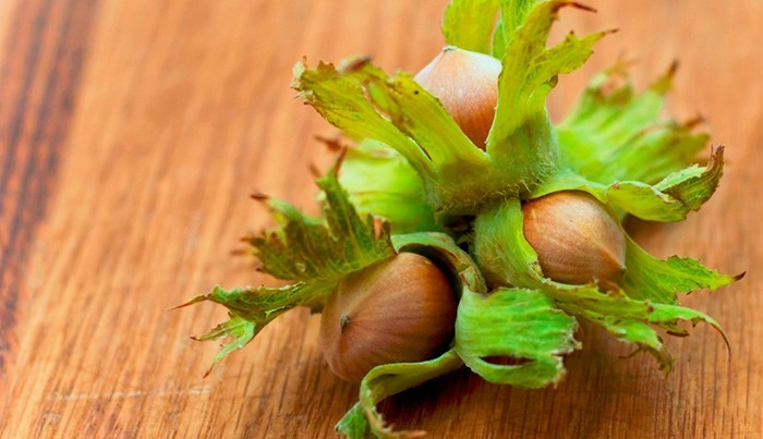 Вред и противопоказания орехов фундук