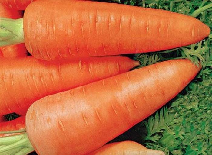 Противопоказания и вред моркови