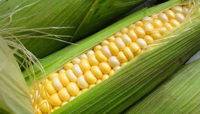Польза кукурузы для организма человека