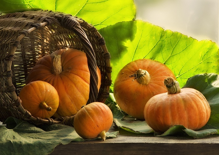 Польза и вред семечек тыквы для организма