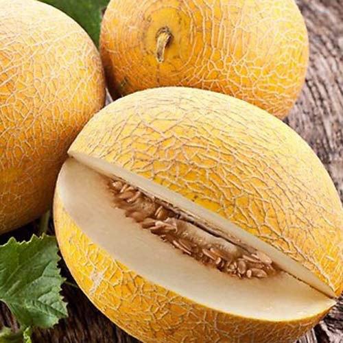 Полезные свойства семечек дыни
