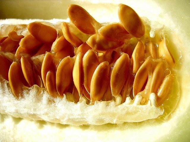Полезные свойства дынных семечек